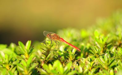 Dragonfly, red insects, plants