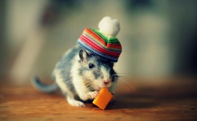 Cute little mouse with a hat