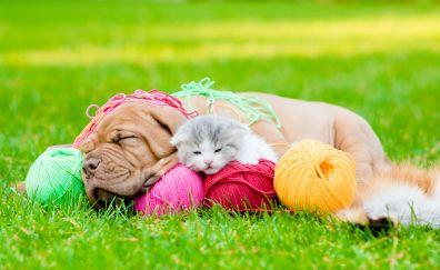 Asleep, dog and cat, woolen ball, grass