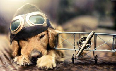 Puppy, dog, plane, glasses, pet animal