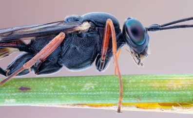 Slender, parasite, insects, macro