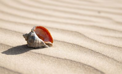 Seashell in the sand