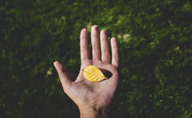 Yellow small leaf in hand