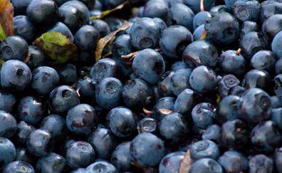 Blueberries, blue fruits, berries