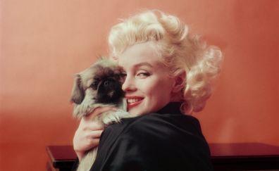 Marilyn Monroe, puppy, cute pug, celebrity