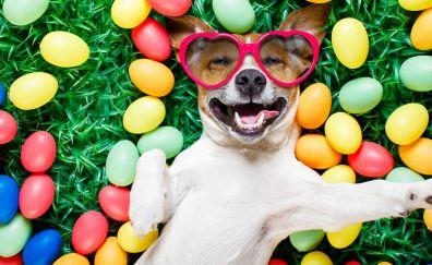 Dog, lying down, Easter eggs, sunglasses, humor