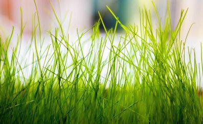 Green grass threads, close up