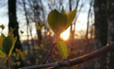 Spring leaves, sunlight, tree branch