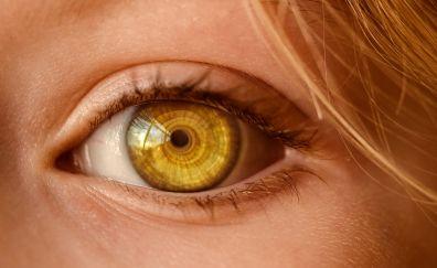 Yellow eyes, close up