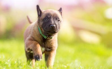 Dog, grass, cute, puppy, 4k