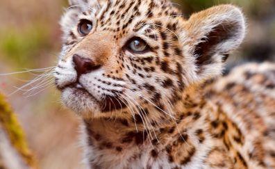 Small cub of leopard