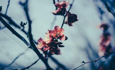 Flowers, tree branch, spring