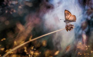 Butterfly macro creamy bokeh