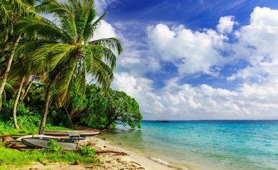 Tropical beach, palm tree, nature