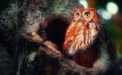 Cute, tree trunk, red owl bird
