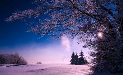 Winter, snow, sunset, dusk, tree, landscape, nature