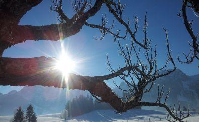 Winter, sunshine, tree trunk, sunlight, snow