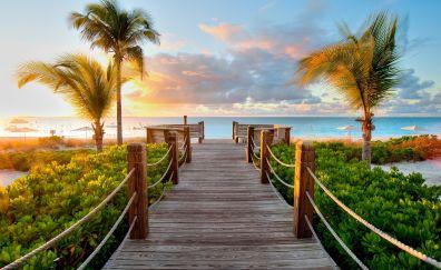 Beach, wooden bridge, palm tree