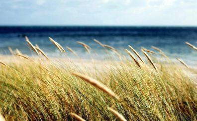 Spikelets of grass