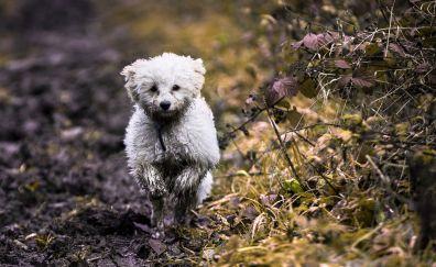 Dog, puppy, pet animal, run