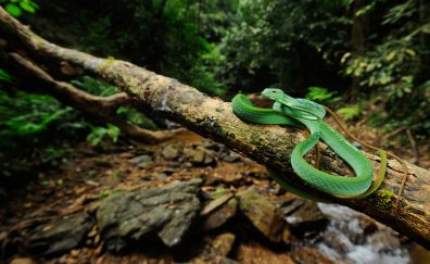 Snake on branch of tree