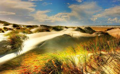Dunes, north sea, beach, grass