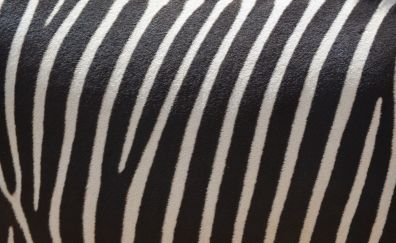 Zebra skin, stripes