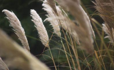Spider web, grass threads