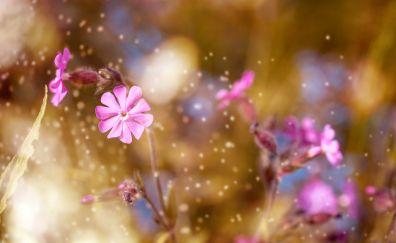 Glitters, pink flowers, blur