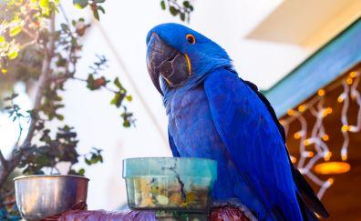 Blue macaw parrot bird