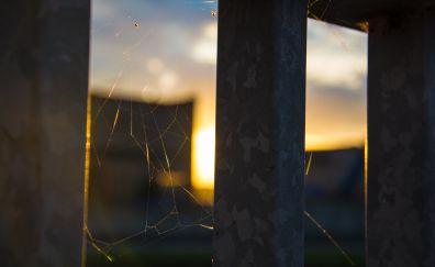 Spider web in window