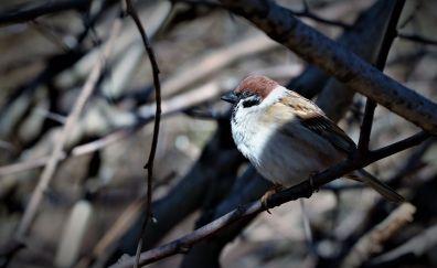 Passerine bird, sitting on tree branch