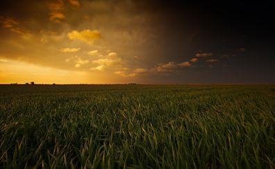 Sunset and grass fields