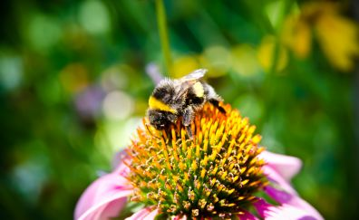 Bee on flower for pollination