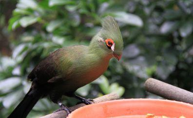 Green bird, eating