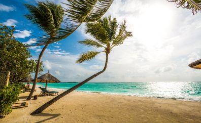 Maldives beach, palm tree, holiday, summer