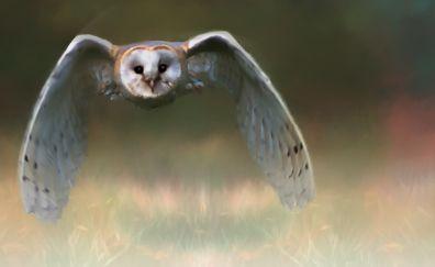 Art, owl bird, fly