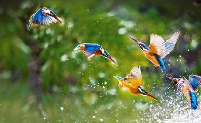 Lovely kingfisher birds