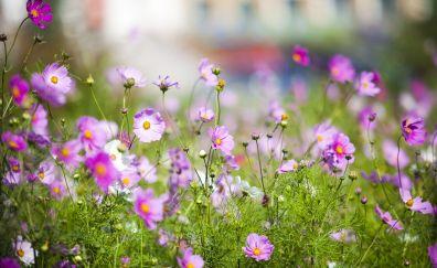 Grassland, meadow, purple flowers