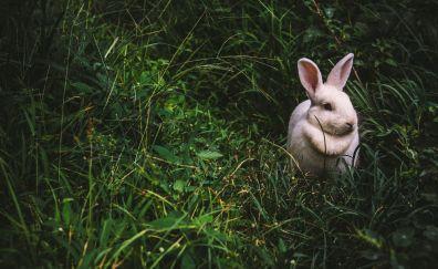 Rabbit, hare, grass
