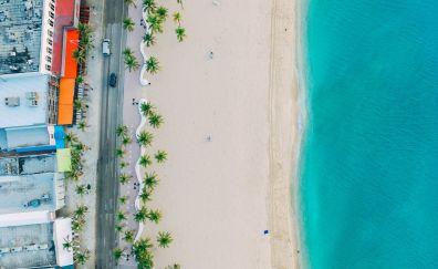 Beach, blue sea, palm tree, Aerial view