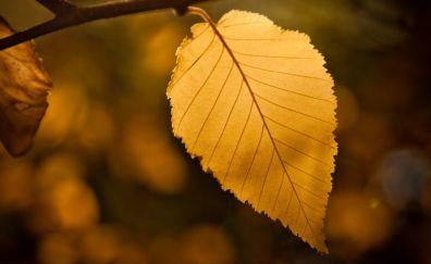 Yellow leaf, close up