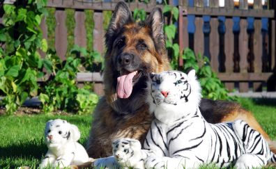 White tigers toys and German Shepherd dog