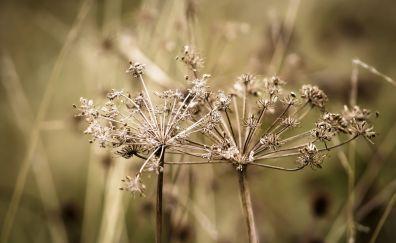 Weeds, dry plants