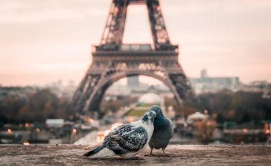 Doves couple, birds, Eiffel tower