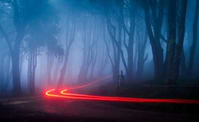 Foggy forest road lights