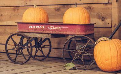 Pumpkin fruits