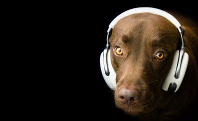 Dog, head phone, humor, muzzle