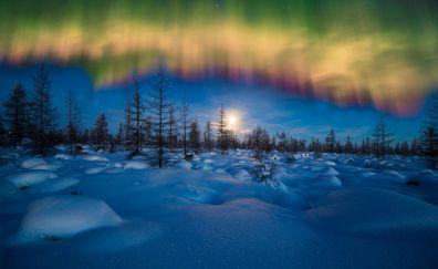 Winter, aurora, borealis, northern lights