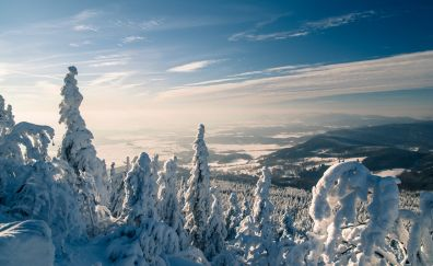 Nature winter looks amazing